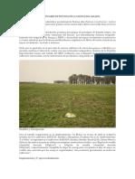 Implantación de Cultivares de Festuca en La Cuenca Del Salado