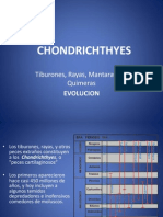 05) CHONDRICHTHYES