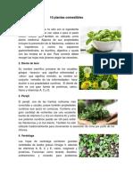 10 Plantas Comestibles