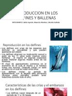 REPRODUCCION EN LOS DELFINES Y BALLENAS-1.ppt