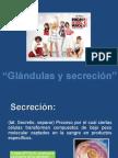 glandula y secreción