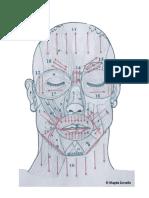 Actividad Rodillo Facial (2)