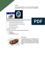 Estructuras y Funciones Celulares