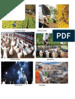 AGRICULTURA   APICULTURA.docx