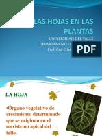 La Hoja - Morfologia