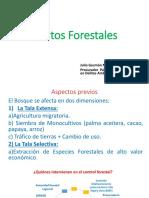 Delitos Forestales - Crimen Organizado