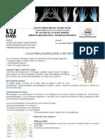 anatomia, ecografia y lesiones de muñeca