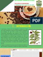Diapo de Cafe Cosecha y Beneficio
