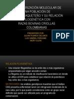 Caracterización Molecular de Una Población CCQ Con Relación Filogenética en Las Razas Criollas Colombianas