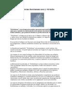 Trichoderma harzianum usos y virtudes.doc