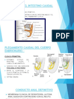 desarrollo del tubo digestivo