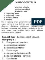 Sistem Uro-Genital