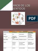 Sentidos - Fundamentos Neurobiológicos