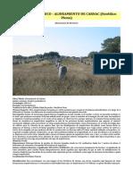 Arte Prehistórico - Alineamiento de Carnac (Neolítico Pleno)