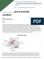 Anatomia Lobulos Cerebrales Fisiologia Basica
