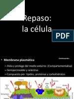 CLASE 13-La estructura del DNA.pptx