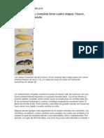 METAMORFOSIS COMPLET1
