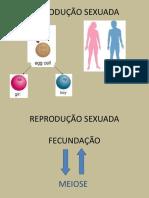 2º - Meiose.pdf