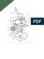 Microscopio Compuesto Partes