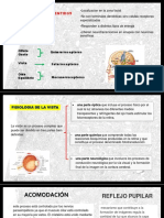 Diapositivas-fisiologia de Los Sentidos