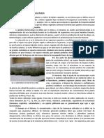 3. Micropropagación cactáceas.pdf