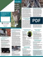 Como Vivir Con Los Gatos de Tu Vecindario Alley Cat Alleys
