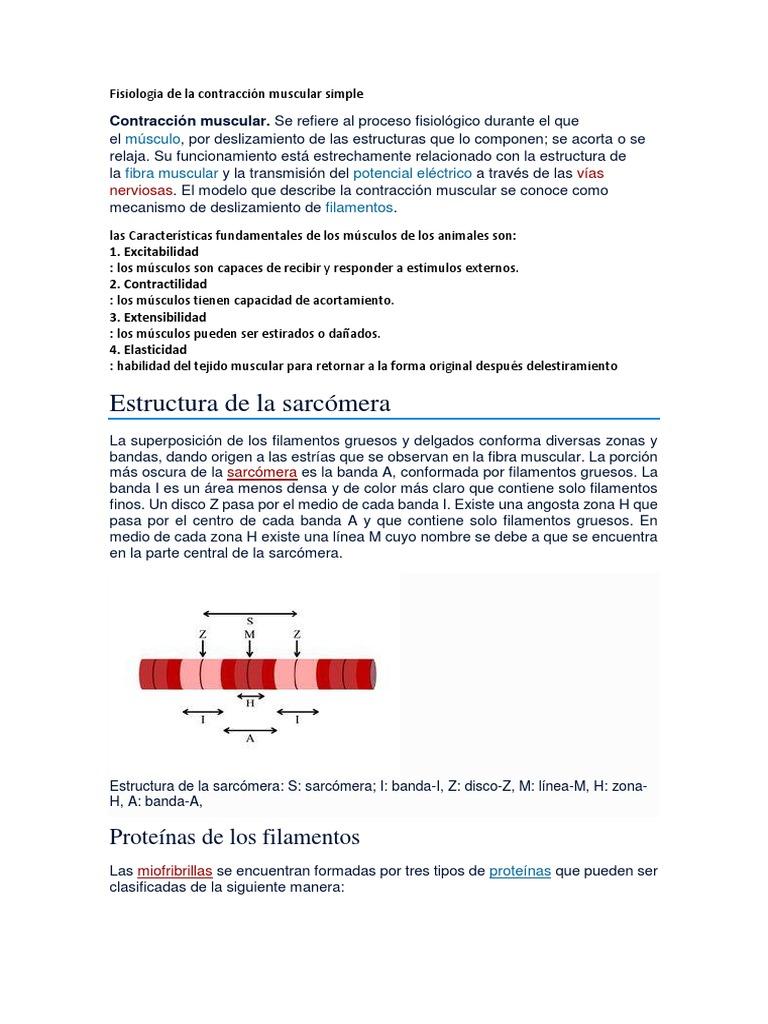 Fisiologia De La Contracción Muscular Simple Contracción