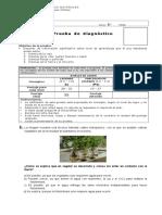 Diagnóstico 6° Básico CCNN