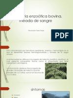 Hematuria Enzoótica Bovina