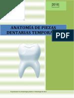 Anatomía de dientes temporales