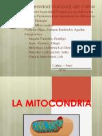 mitocondria-cf-eff0 (1).pptx