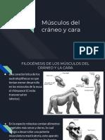 Musculos Del Craneo y Cara