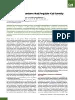 Epigenetic Mechanisms that Regulate Cell Identity