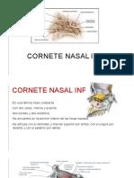 Cornete Nasal Inferior y Hueso Palatino