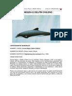Tonina negra delfin