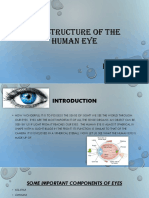 The Structure of the Human Eye