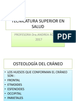 An.fonoaudiologica(Craneo) 1