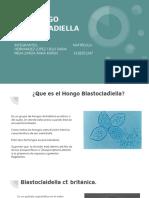 Hongo Blastocladiella