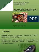 Clase Orden Lepidoptera-1531175603