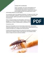 ENFERMEDADES CAUSADAS POR CUCARACHAS.docx