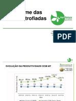 Sindrome das Raízes Atrofiadas final.pdf