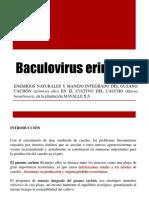 Baculovirus erinnyis