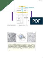 1. Transporte Regulado y Transmembrana 2