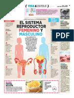 El Sistema Reproductor Femenino y Masculino