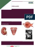 sd glomerulares.pptx