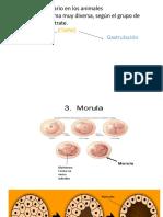Desarrollo Embrionario en Animales