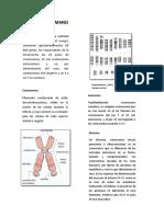 EL-GENOMA-HUMANO.docx