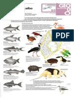 geo_u3_l95_cuenca_del_lago_fauna.pdf