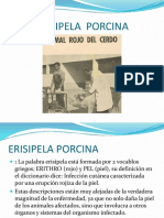 ERISIPELA PORCINA 001.pptx