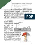 1conceptos Basicos Sobre Macromicetos Con Citas(1)